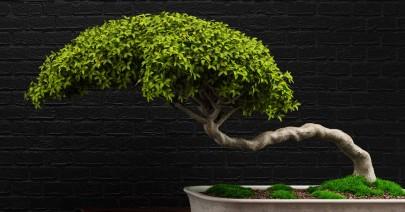 Su «Storie di alberi e bonsai» di Alejandro Zambra