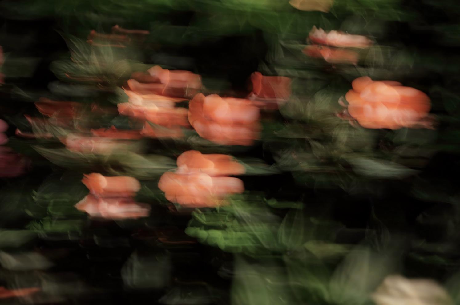 Florealità in m