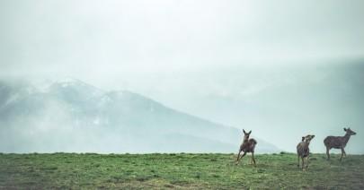 Su «Fratello cervo» di Juan Pablo Roncone
