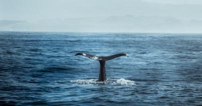 Una battaglia con Moby Dick