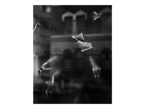 Sara Cucè, «City (e)scape»