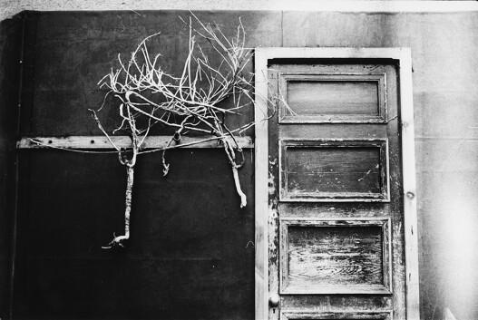 Sara Cucè, «Untitled», This Body